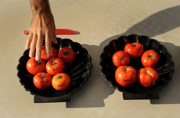 The Flavr Savr tomato