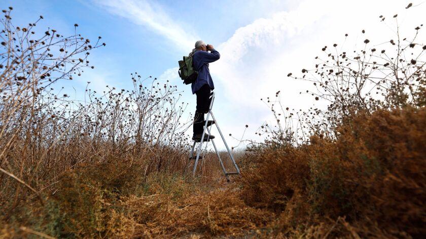 """Biologist Robert """"Roy"""" van de Hoek, seen at the Ballona Wetlands in Marina del Rey, believes he's discovered a new species of sunflower growing there."""
