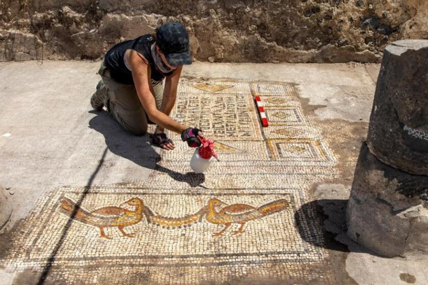 Fotografía facilitada por el Instituto Zinman de Arqueología de la Universidad de Haifa, de la arqueóloga Jessica Rentz limpia el mosaico, en la que se ven las figuras de dos aves y una inscripción en griego. EFE/Michael Eisenberg