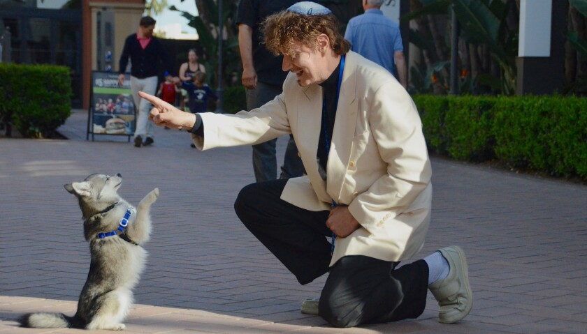 Vladae Roytapel, The Russian Dog Wizard engages Wesley, the Alaskan Kleekai during a training sessio