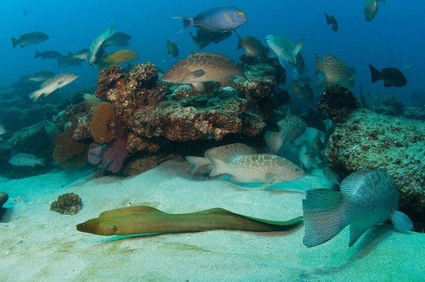 Marine life at Cabo Pulmo National Park near the southern tip of Baja California increased by 463 percent between 1999 and 2009, according to a new study led by researchers at the Scripps Institution of Oceanography.