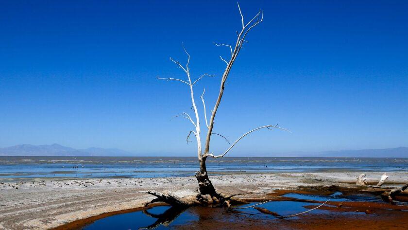 Dead trees, debris and dead fish dot the shoreline of the Salton Sea in 2015.