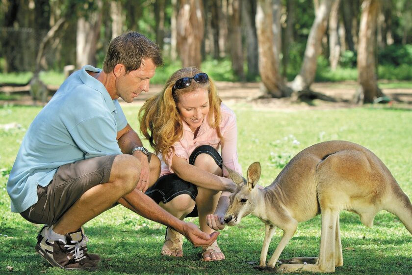 At the Currumbin Wildlife Sanctuary, you can feed free-roaming kangaroos and maybe even cuddle a koala.