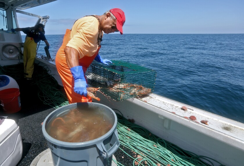 Antonio Cagnolo retrieves live prawns from traps pulled from the bottom of the Pacific Ocean by captain Marco Voyatzis.