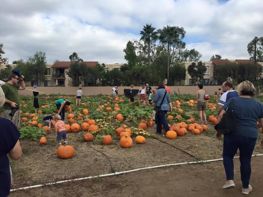The Escondido High School FFA holds its annual Pumpkin Fest from 10 a.m.-4 p.m. Saturday at the high school farm, 1535 N. Broadway.