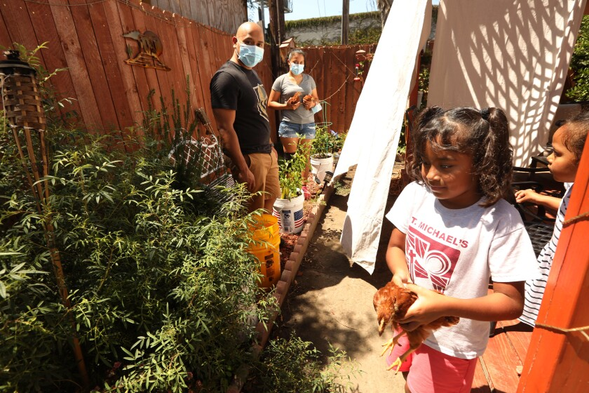 The Mejia family work their garden in South Los Angeles.