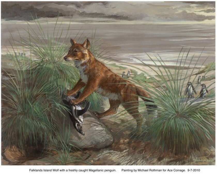 The origin of the Falkland Island wolf: A Darwin mystery solved