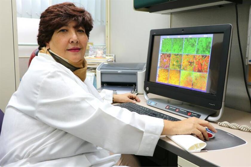 Fotografía cedida hoy, jueves 12 de julio de 2018, que muestra a la investigadora Mineko Shibayama del Centro de Investigación y de Estudios Avanzados (Cinvestav). EFE/CINVESTAV/SOLO USO EDITORIAL