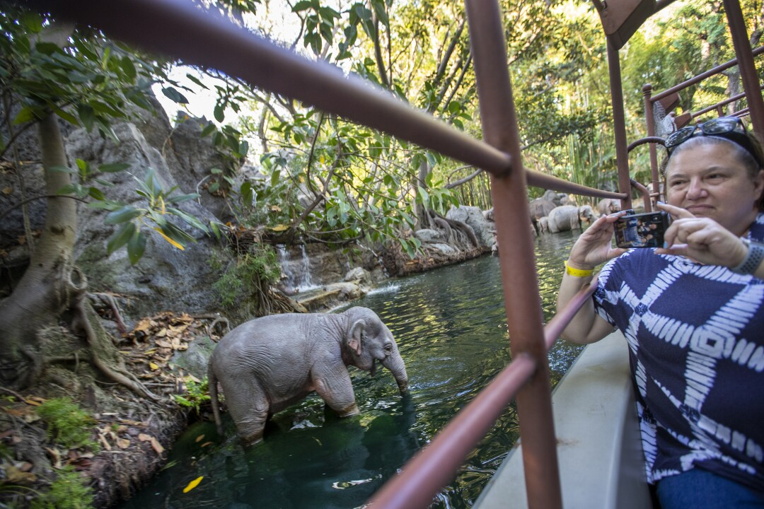 Riders view bathing elephants during the Jungle Cruise ride