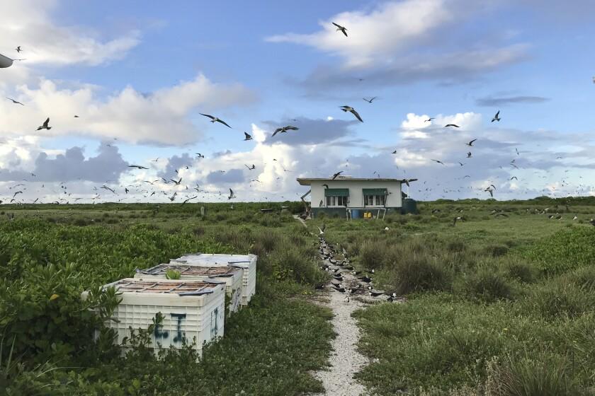 Seabirds fly over a field camp on Kure Atoll in the Northwestern Hawaiian Islands.