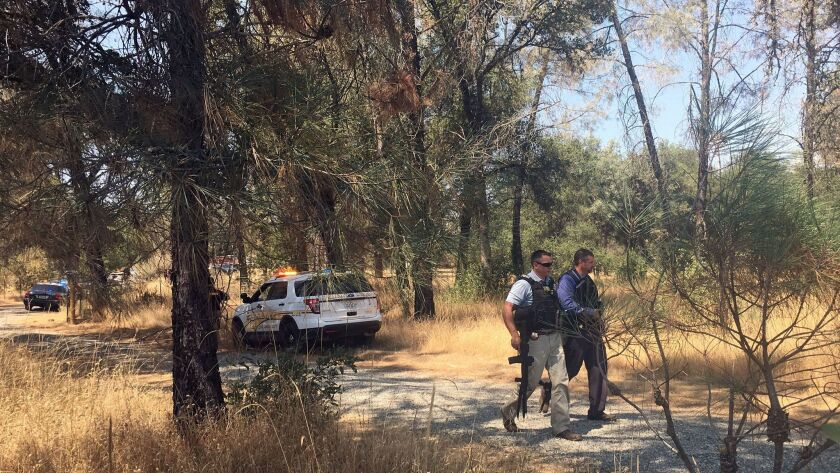 Officers search the area after two Yuba County sheriff's deputies were shot and wounded at a Rastafarian marijuana farm in the small community of Oregon House, Calif., in August.
