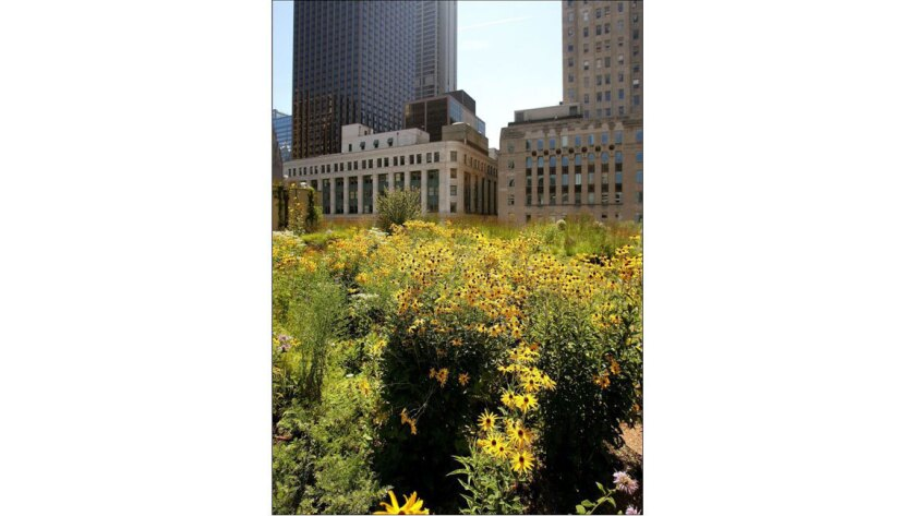 Chicago's first green roof was installed atop City Hall in 2000.