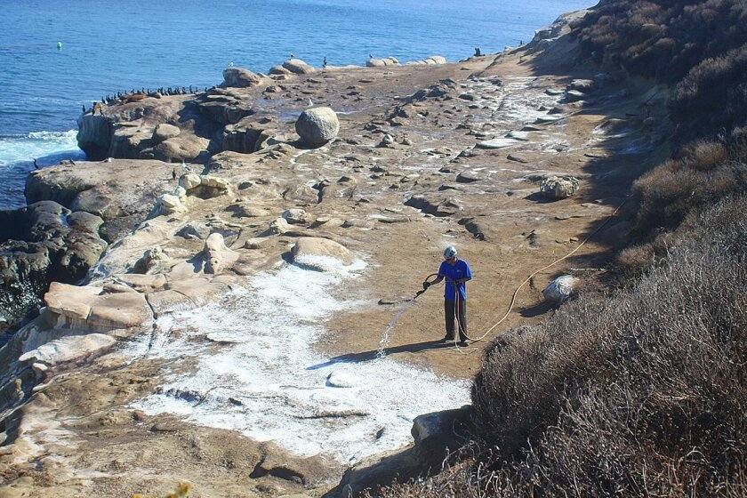 "A Blue Eagle worker, hired by the City of San Diego, sprays a layer of cleaning agent on the La Jolla Cove bluffs in 2013. The ""Cove Stench"" or continuing foul odor at La Jolla Cove is caused by sea lion and bird waste, according to city officials. For years, sea lions have made the natural habitat"