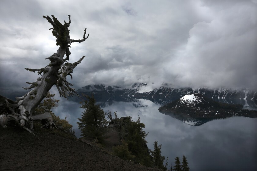 An old, weathered tree stands like a sentinel at Watchman Overlook high above Crater Lake in Oregon.