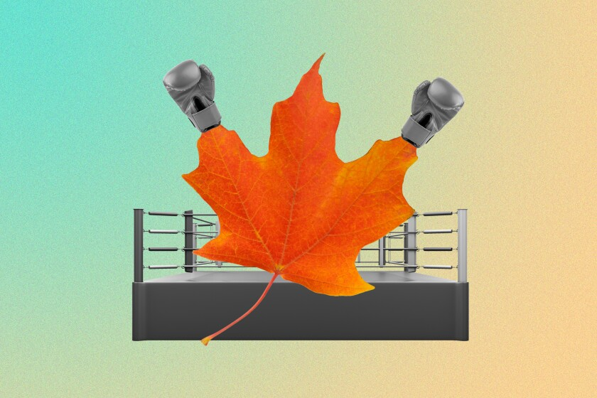 Illustration of a maple leaf with boxing gloves