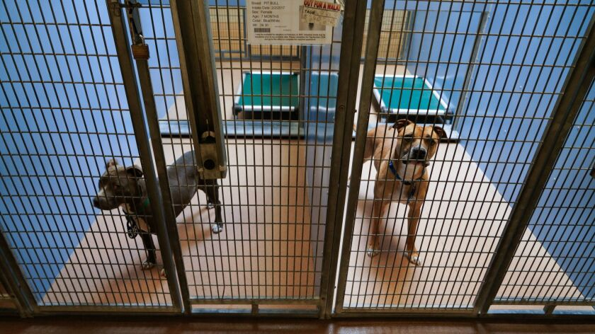 At the Department of Animal Services, the public is invited to walk about the the open public areas to visit with the dogs that are available for adoption.