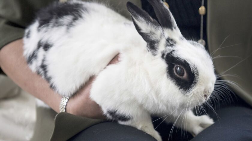 Mike Pence's family rabbit Marlon Bundo is a hit in two very different books.