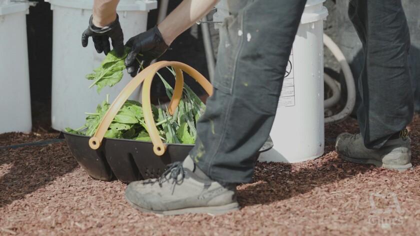 Agricultor corta hojas  de una planta en un patio