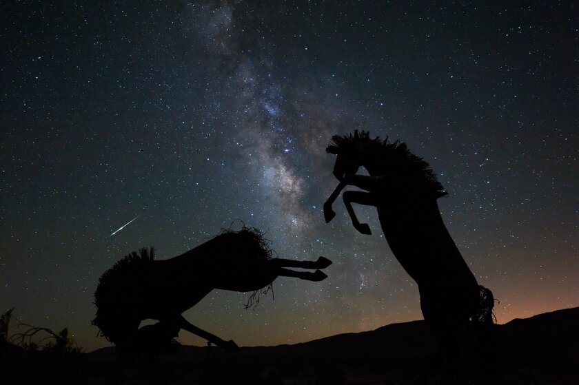 The summertime Milky Way shines brightly over Southern California's Anza-Borrego Desert. In the foreground are silhouettes of wild horses, two of dozens of massive sculptures of animals that once dominated the Borrego Valley.  During this 13-second exposure, a bright meteor shot across the sky and