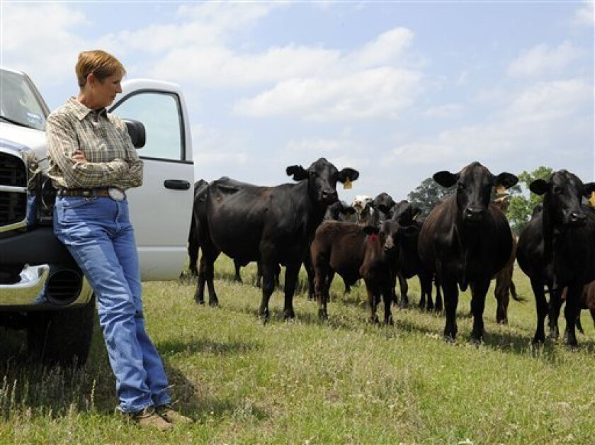 Rancher Linda Galayda looks over some of her cattle Friday, April 27, 2012, at her ranch in Elkhart, Texas. (AP Photo/Pat Sullivan)