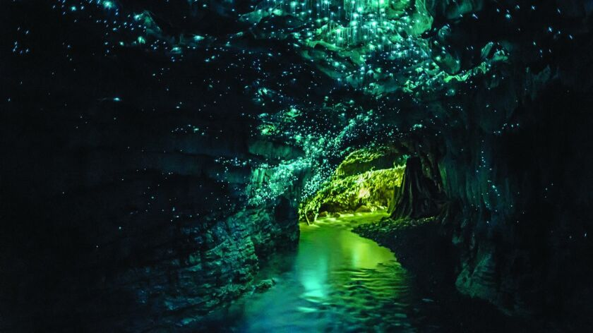 Waitomo Glowworm Caves, on the North Island of New Zealand.
