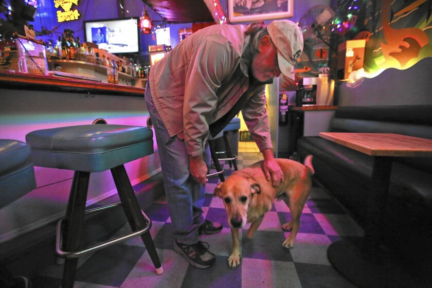 Tony Underwood pets Pretty Boy, a yellow labrador retriever, inside the Marlin Club, a bar he owns and operates in Avalon. The dog belonged to Bruce Ryder, a frequent patron of the bar who was killed during the recent storm in Avalon. Underwood says he will care for P.B. now.