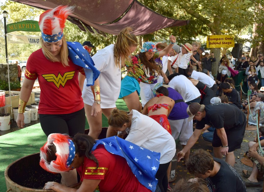 Attendees stomp grapes at the 25th Calaveras Grape Stomp in Murphys, Calif.