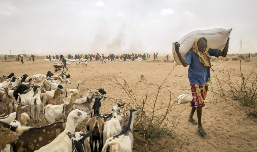 A man carries donated animal feed in Ethiopia, near the border with Somalia. The severe drought in Ethiopia has made headline news. But it has also scorched Somaliland and Puntland, semiautonomous regions in Somalia's northeast.