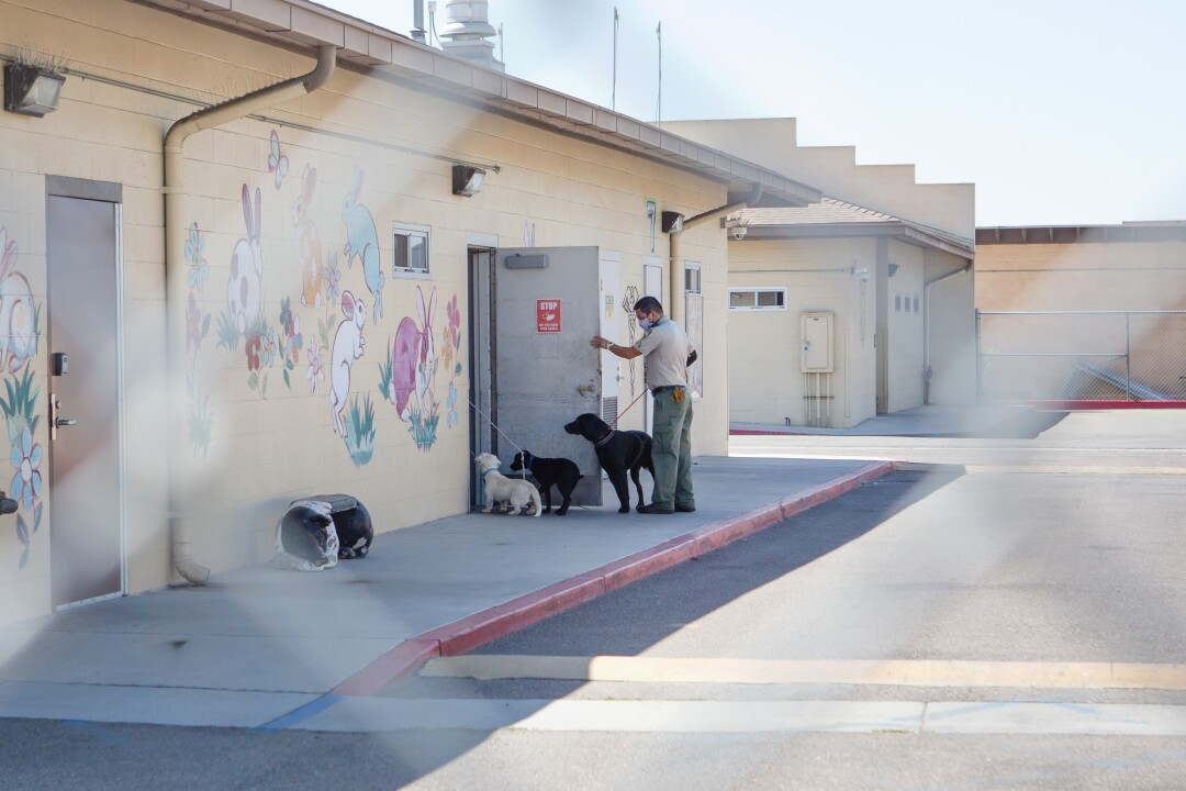 Joe Cueva brings three stray dogs into a Los Angeles County Animal Care and Control shelter.