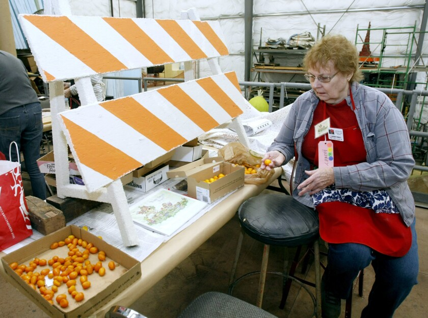 Audrey Prest, chair of the Burbank Tournament of Roses Assn. decorations committee, shows the kumquats sent in by locals that will be used to decorate two barricades for the parade float.