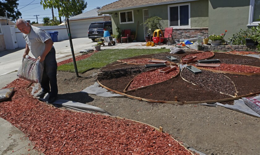 Richard Delgado, 65, replaces most of the turf in his front yard with three different colors of bark in June. He was denied the rebate because he had not taken before photos before his grass died.