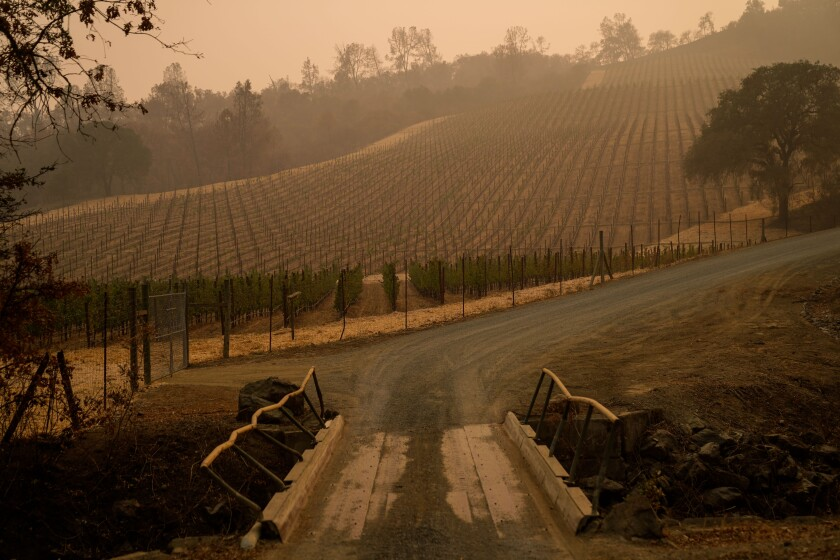 Fire-damaged vineyards at the Somerston Estate Winery & Vineyards in St. Helena.
