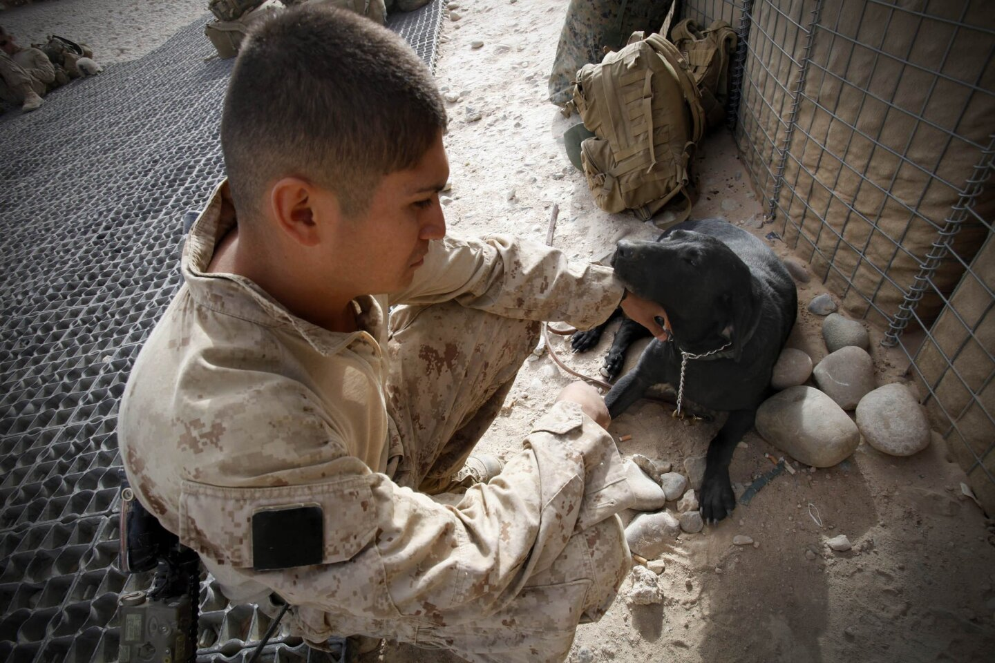 Marine dogs in Afghanistan