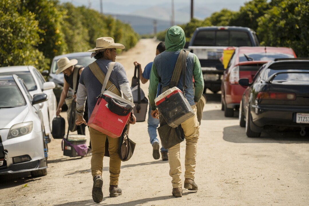 Farmworkers walk to their cars