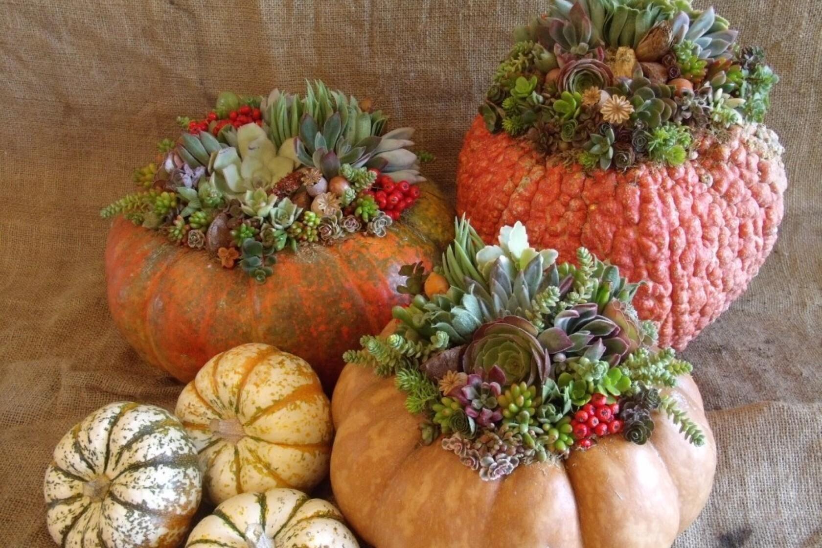 Plant O Lantern Pumpkins As Succulent Planters Los Angeles Times