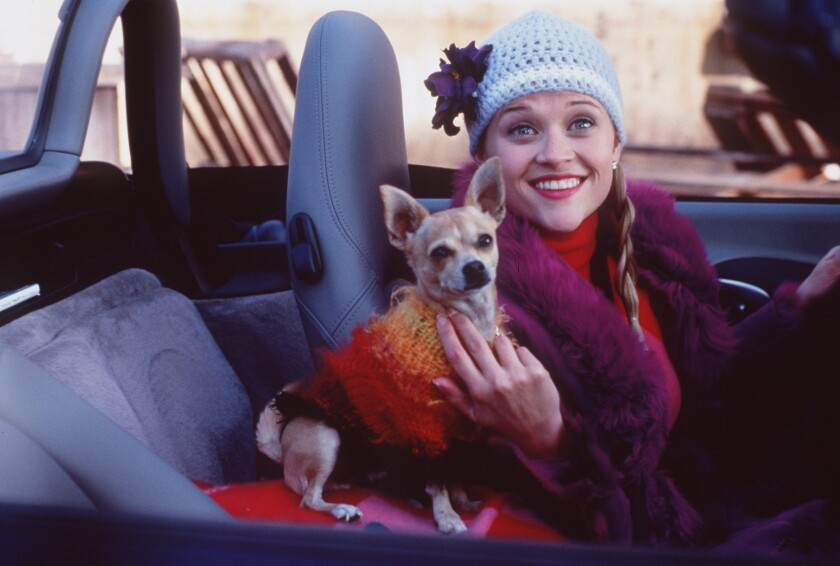 """Reese Witherspoon and Moonie the Chihuahua in the 2001 comedy """"Legally Blonde."""""""