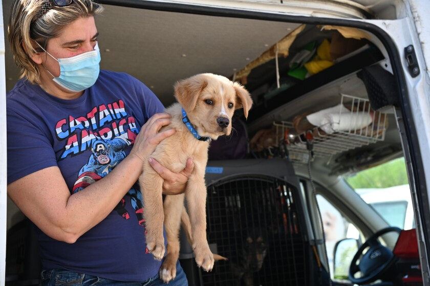 A rescued Texas dog arrives from a storm-affected shelter.