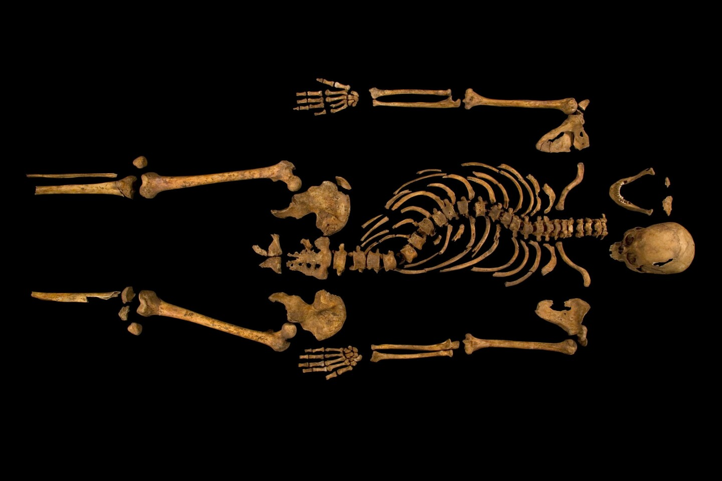 The skeleton of King Richard III was discovered beneath a parking lot in the summer of 2012.