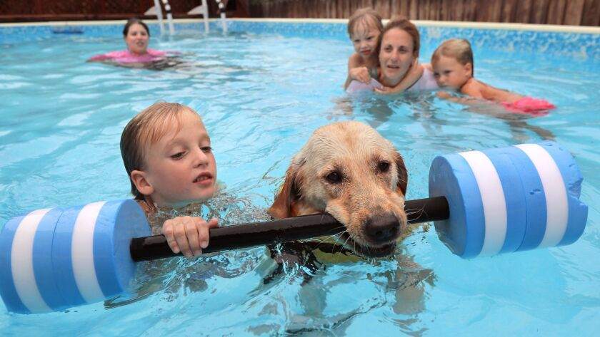 At the home of Judy Fridono her Labrador retriever named Cori pulls 6 year old Logan Powell, 6, using an aquatic barbell as Cori is trained to be a swimming therapy dog. At right is Logan's mom Jod