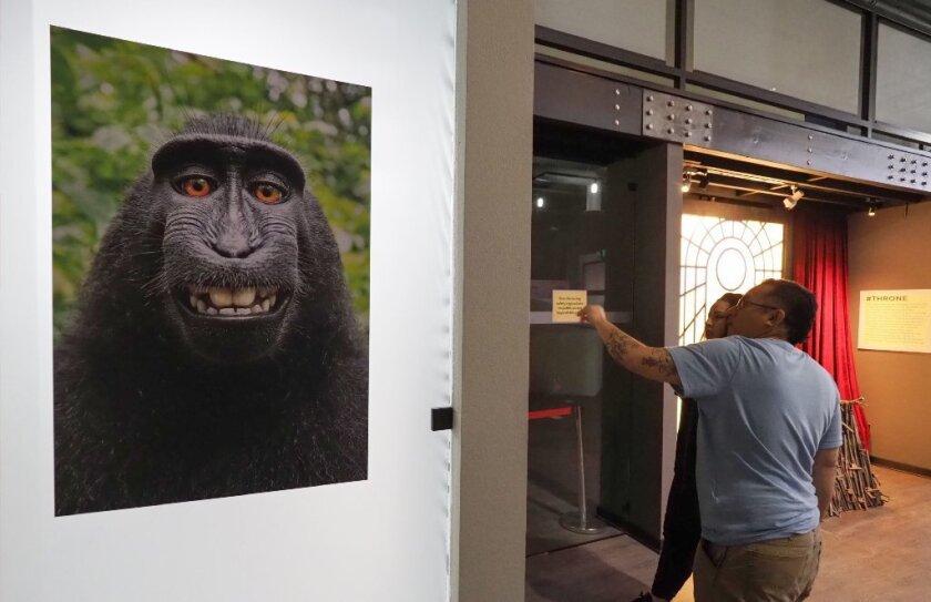 Monkey copyright case