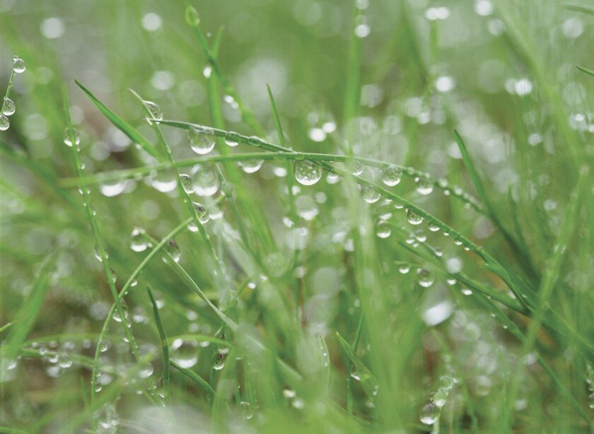 Even a light rain is a good reason to turn off irrigation and save a watering day.