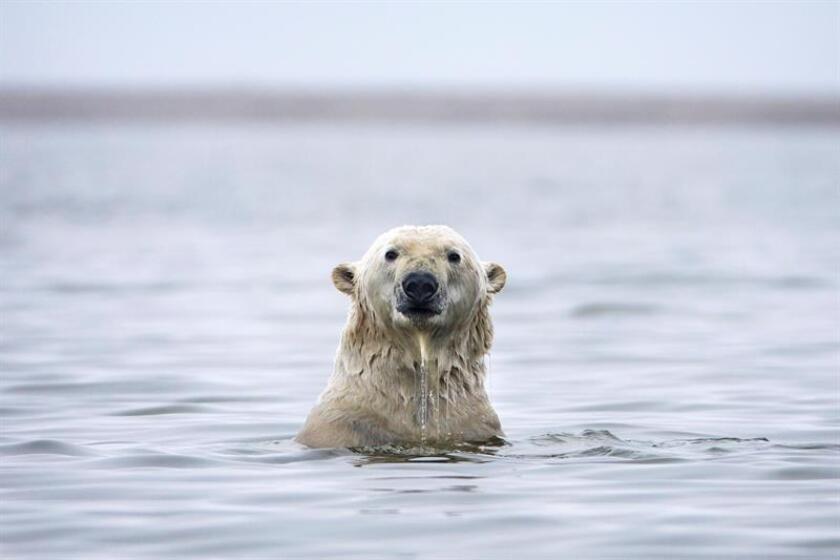 Reducir medio grado la temperatura global daría beneficios como la disminución del nivel global del mar y la reducción del deshielo ártico en el verano, señaló hoy un informe del Grupo Intergubernamental de Expertos sobre el Cambio Climático. EFE/ARCHIVO