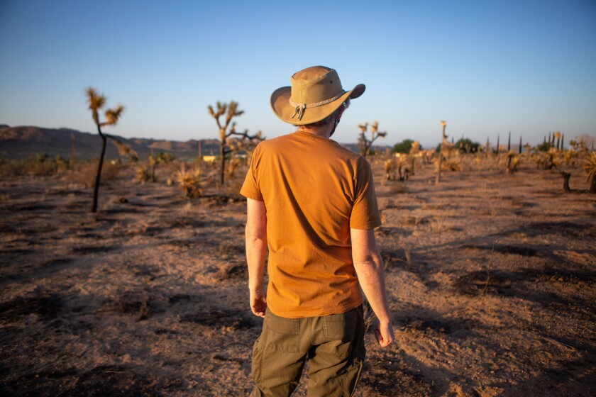 Brendan Cummings in an area where Joshua trees are facing extinction due to climate change.