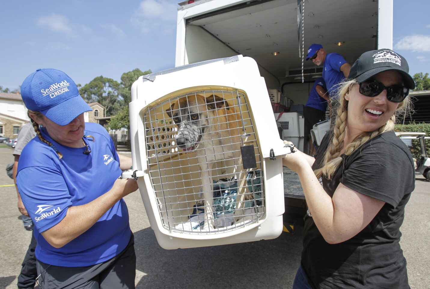Helen Woodward takes in Texas shelter animals