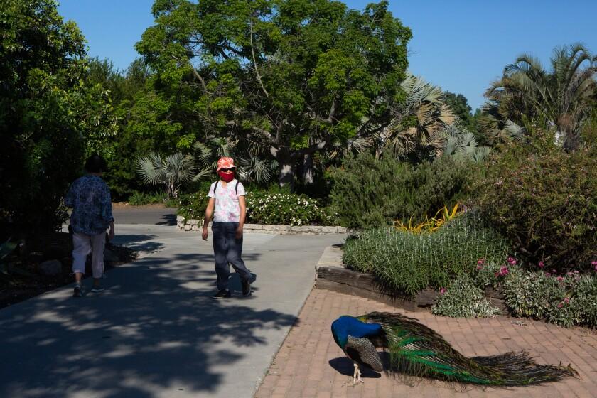 L.A. County Arboretum