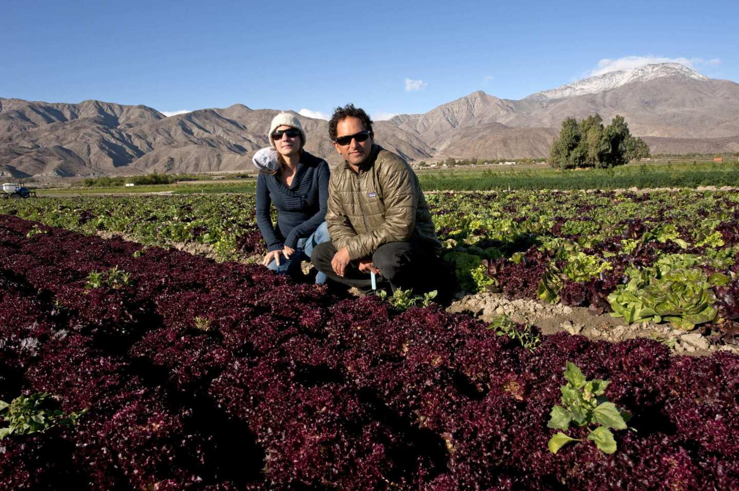 David Retsky and Megan Strom of County Line Harvest next to a row of redleaf lettuce in Thermal.