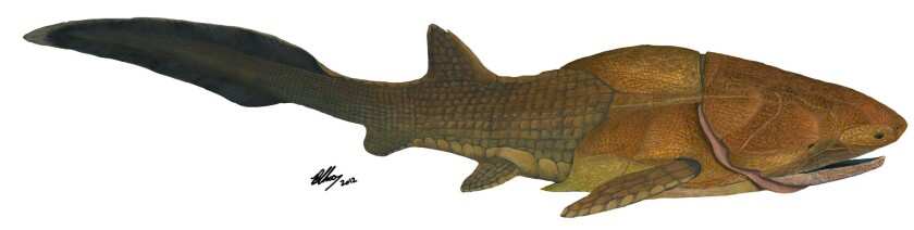 A restoration of Entelognathus primordialis, a 419-million-year-old armored fish that could cause scientists to rethink the way they interpret fossils.