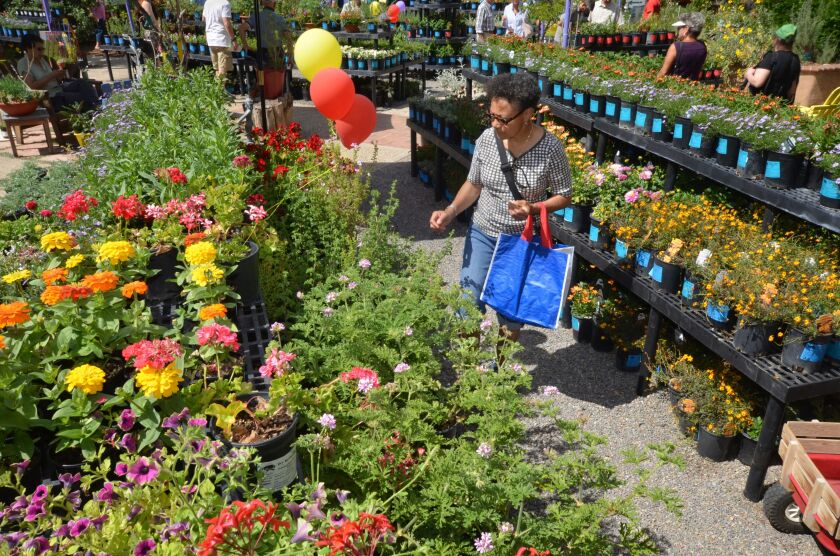 08-08-garden-fest-flowers.jpeg