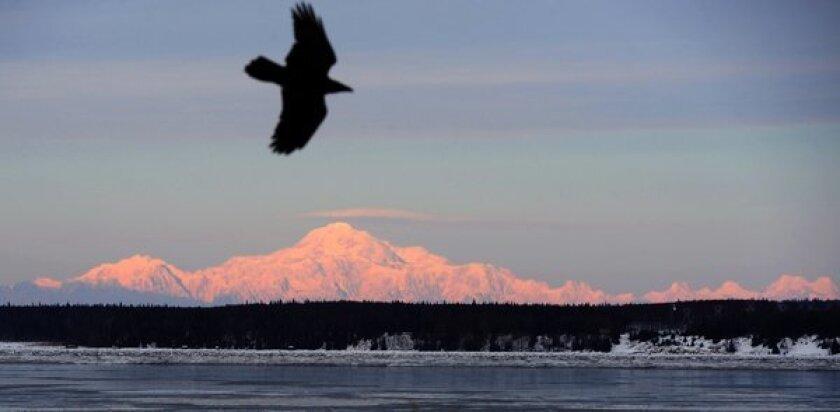 A raven rides a light breeze near Mt. McKinley, the 20,320-foot-high star of Denali National Park in Alaska.