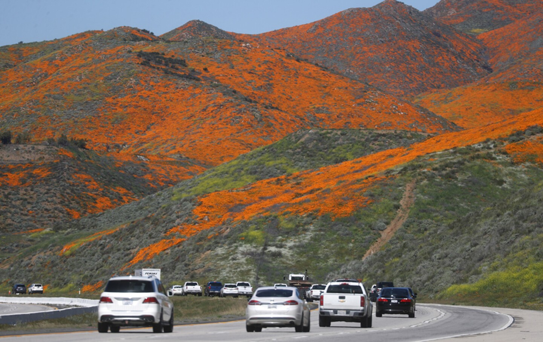Wet Winter Weather Brings 'Super Bloom' Of Wildflowers To California